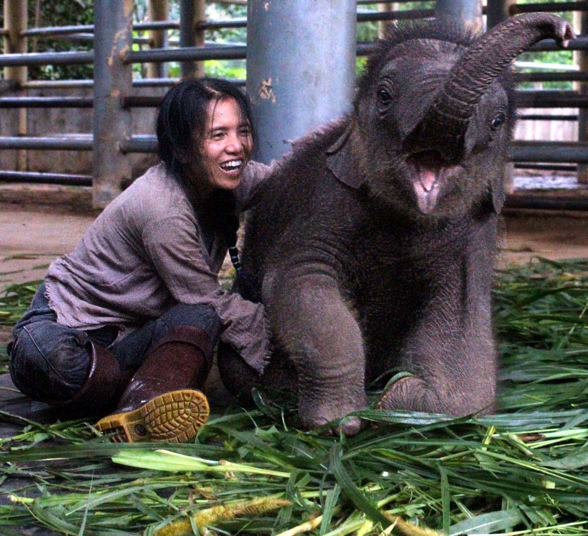 Elefanten-Baby Navann (Foto: Wikimedia Commons, Elemanxx)